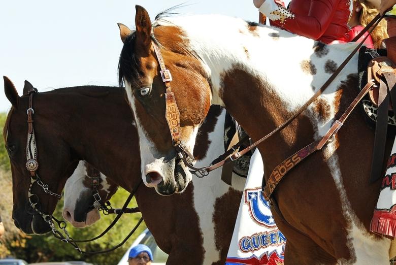 Horses in 4th July Parade Galt Ca